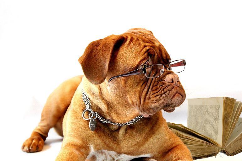 Der Hund im Büro, das Mobiltelefon in der Hand: mit welchen Strategien wir den neuen (beruflichen) Alltag beeinflussen können